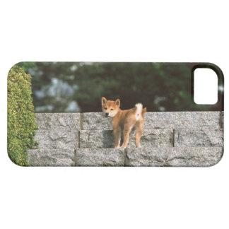 Japanese Midget Shiba 4 iPhone 5 Cases