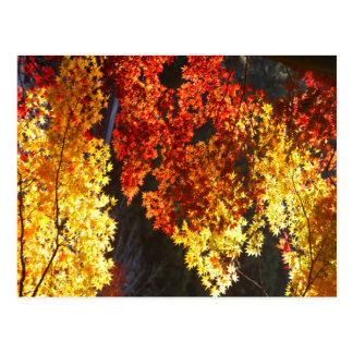 Japanese Red and  Yellow Leaves of Autumn Postcard