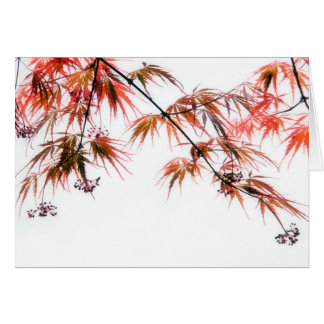 Japanese Red Maple Art Photography Greeting Card