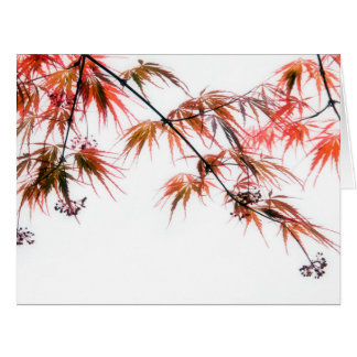 Japanese Red Maple Art Photography L Big Greeting Card
