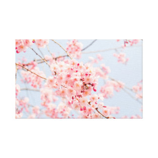 Japanese Sakura. Cherry Blossoms. Spring. Canvas Print