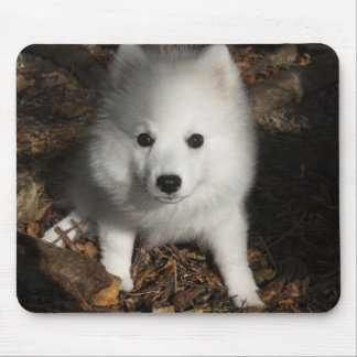 Japanese Spitz puppy Mouse Pad