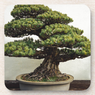 Japanese White Pine Bonsai Tree Coaster