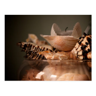 Jar of Sea Shells Postcard