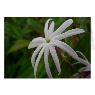 Jasmine Flower Card