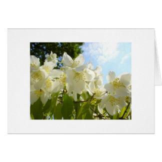 Jasmine Flower Note Card