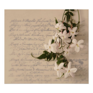 jasmine on old script handwriting poster colossal