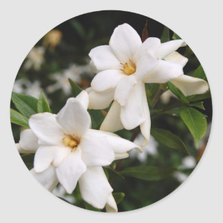 Jasmine Classic Round Sticker