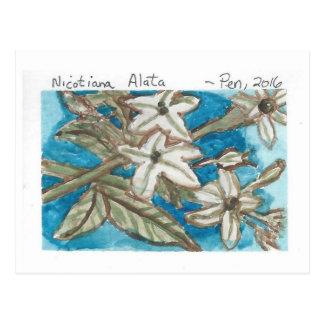 Jasmine Tobacco postcard (watercolor)