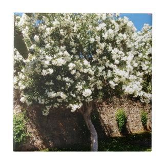 Jasmine Tree In Bloom Small Square Tile