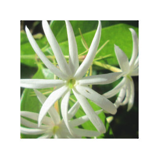 Jasmine White Green Flower Canvas Prints