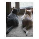 Jasper & Kaylee Kitten Announcements 11 Cm X 14 Cm Invitation Card