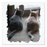 Jasper & Kaylee Kitten Invites 13 Cm X 13 Cm Square Invitation Card