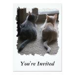 "Jasper & Kaylee Kitten ""You're Invited"" Invitation"