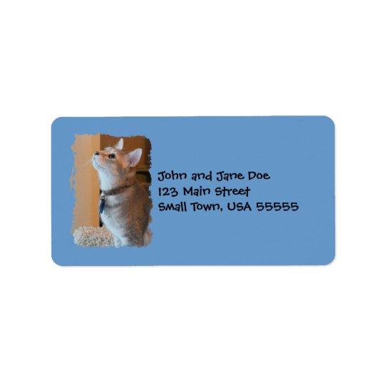 Jasper Kitten Photo Blue Address Labels