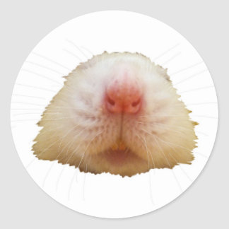 Jasper Rat Classic Round Sticker