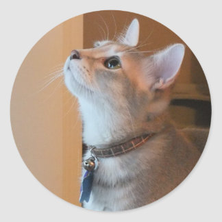 Jasper Small Round Kitten Photo Stickers