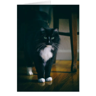 Jasper the tuxedo cat card