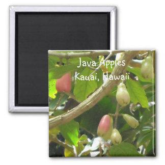 Java Apples Magnet