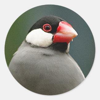 Java Finch Round Sticker