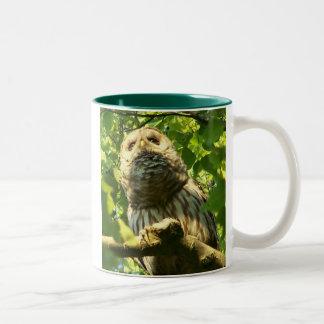 Java Hoot Mug