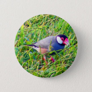 Java Sparrow in the grass in Hawaii 6 Cm Round Badge