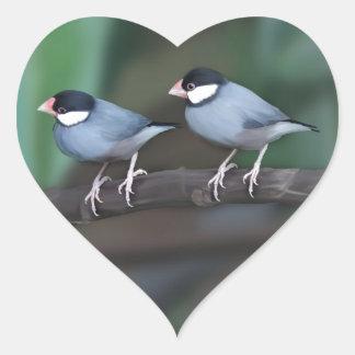 Java Sparrows Heart Sticker