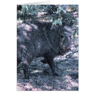 Javelina - Desert Wild Pig Greeting Card