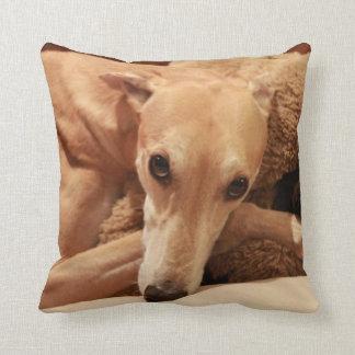 Jax on his pillow. cushion