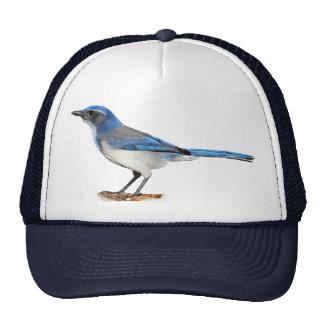 JAY 2 CAP
