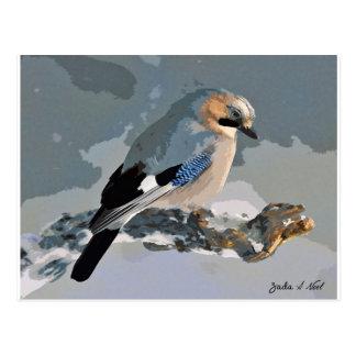 Jay Bird In Winter Postcard