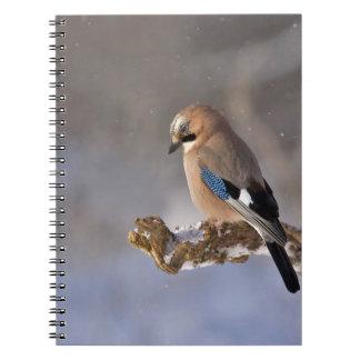 jay notebook