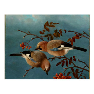Jays - Two Birds in a Tree Postcard