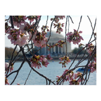 Jefferson Memorial National Cherry Blossom Fest Postcard