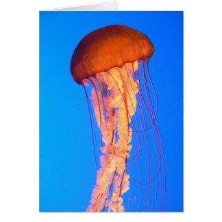Jelly fish Notecard