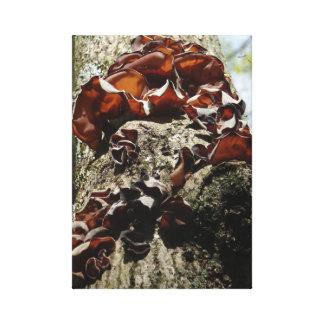Jelly fungus wood ear canvas print