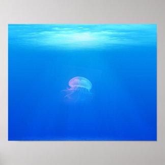 jellyfish-698521 SEA CREATURES ANIMALS BLUE OCEAN Poster