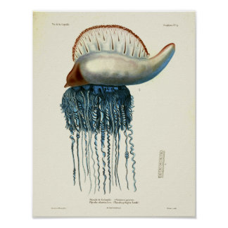 Jellyfish Blue Vintage Sea Creatures Art Print