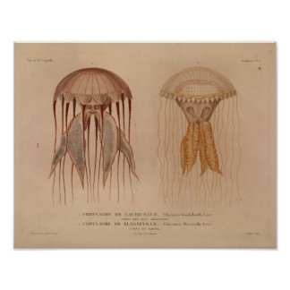 Jellyfish Red Vintage Sea Creatures Art Print