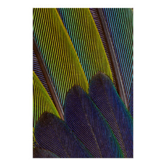Jenday Conure Feather Detail Poster