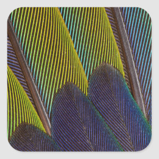 Jenday Conure Feather Detail Square Sticker