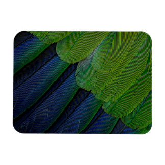Jenday Conure feathers Magnet