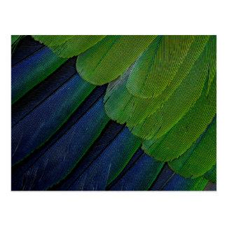 Jenday Conure feathers Postcard