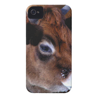 Jersey cow iPhone 4 cover
