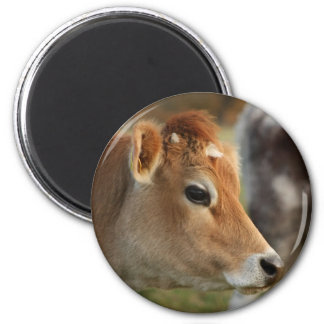 Jersey Cow 6 Cm Round Magnet
