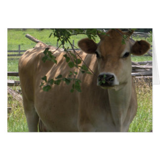 Jersey Cow Notecard