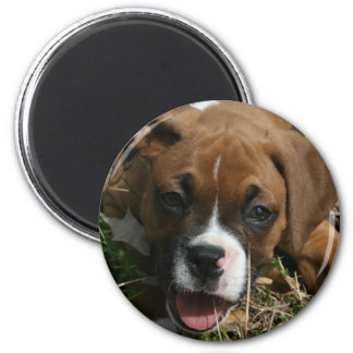 Jersey the Boxer Magnet