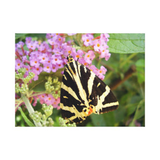 Jersey Tiger Butterfly Canvas Print