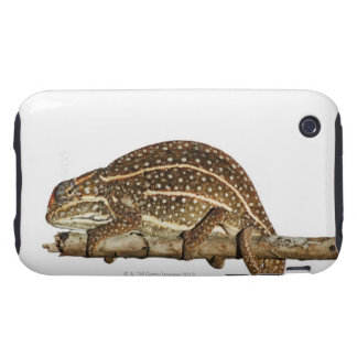 Jewelled chameleon, Campan's chameleon Tough iPhone 3 Case