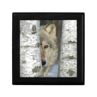 jewelry box with pic of wolf in birch trees